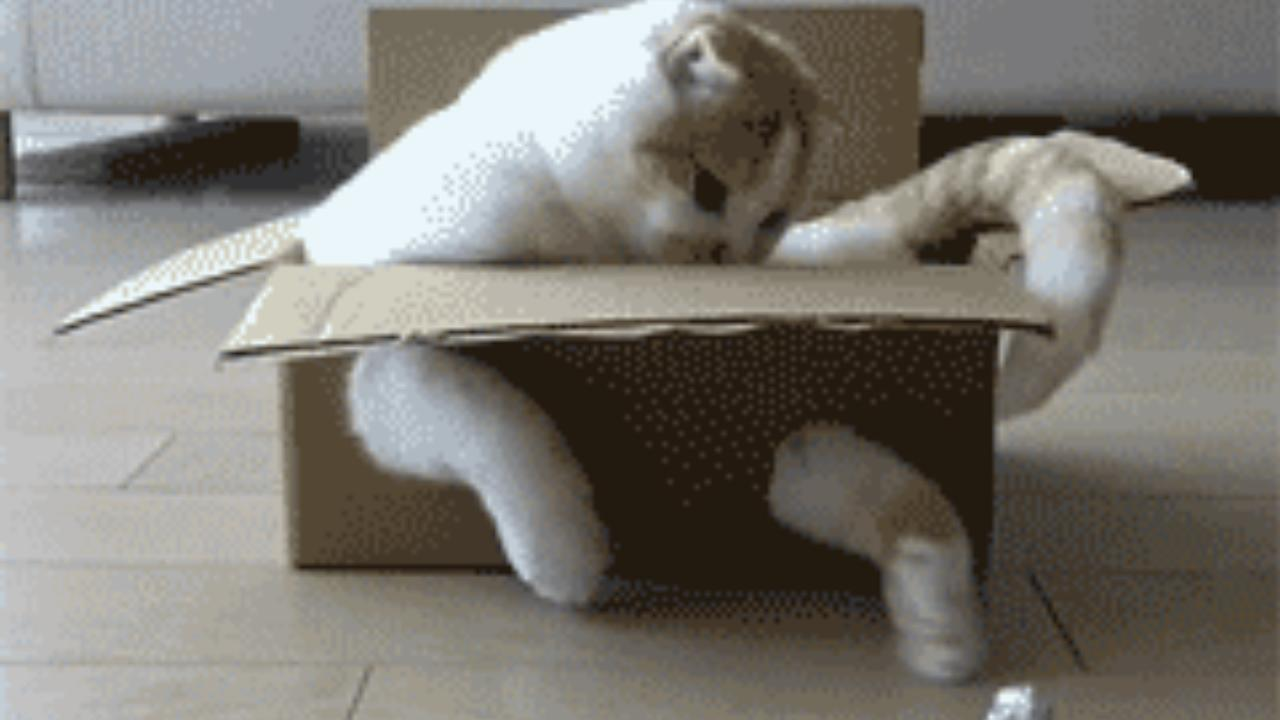 Katzen-GIfs vom Katzenhasser - der WM-kater