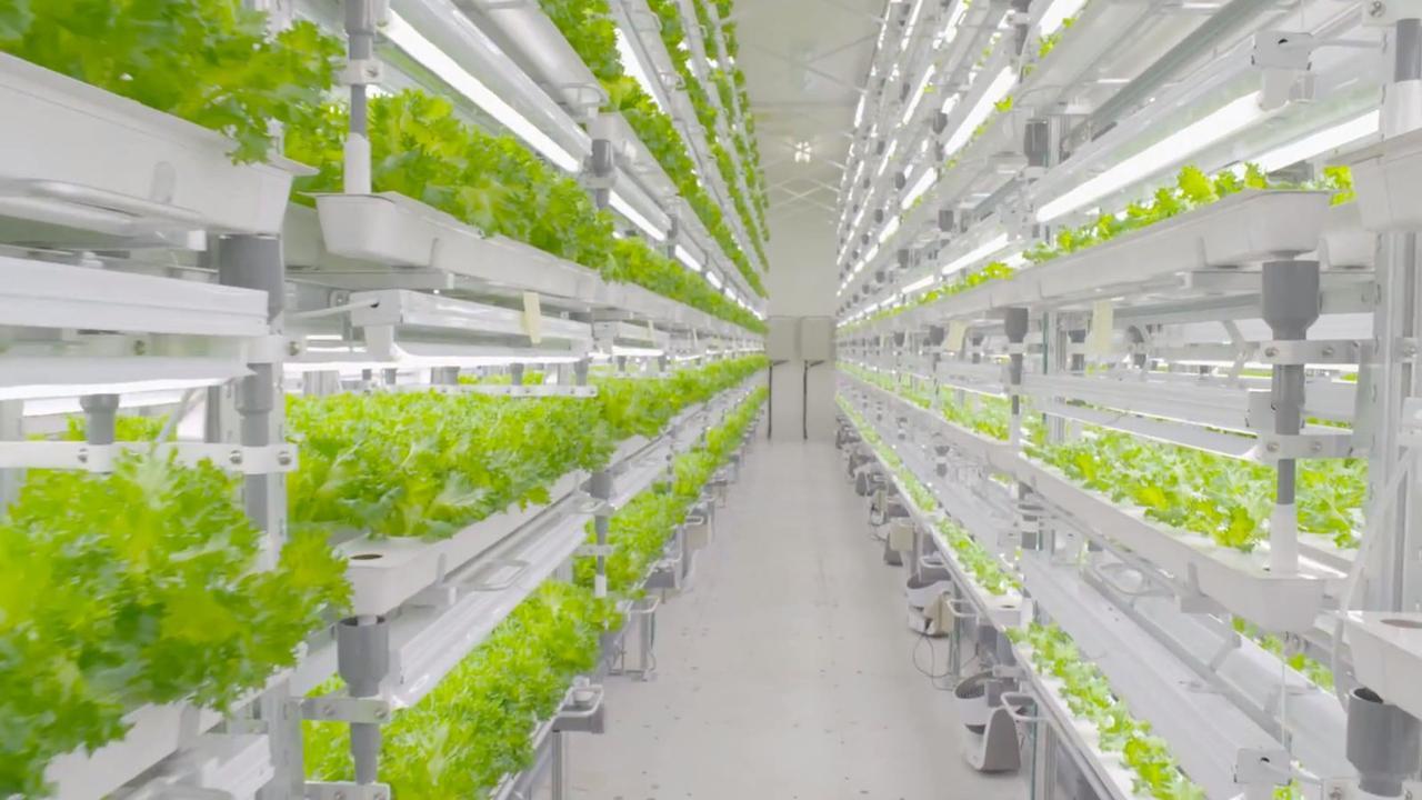 Salatfabrik