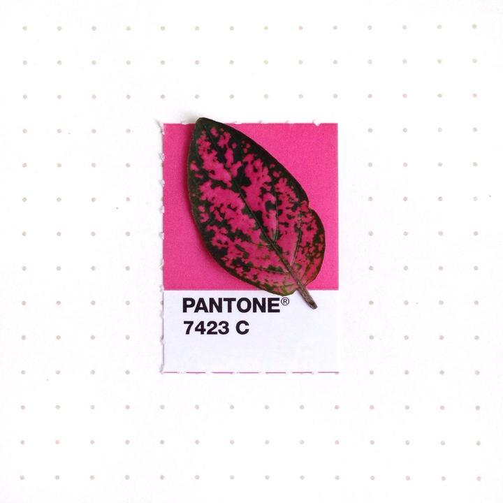 Pantone5