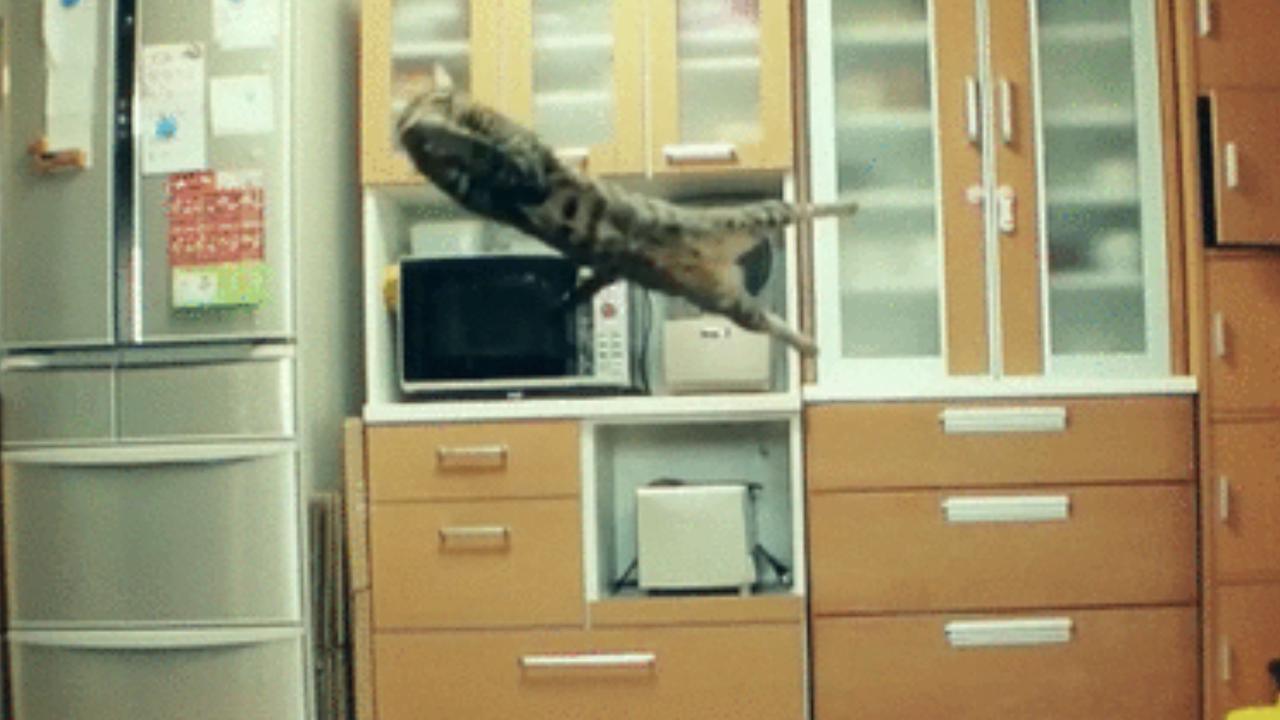 Katzen-Gifs von Katzenhasser: der Torwart