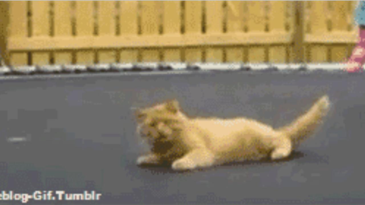 Katzen GIF Trampolin