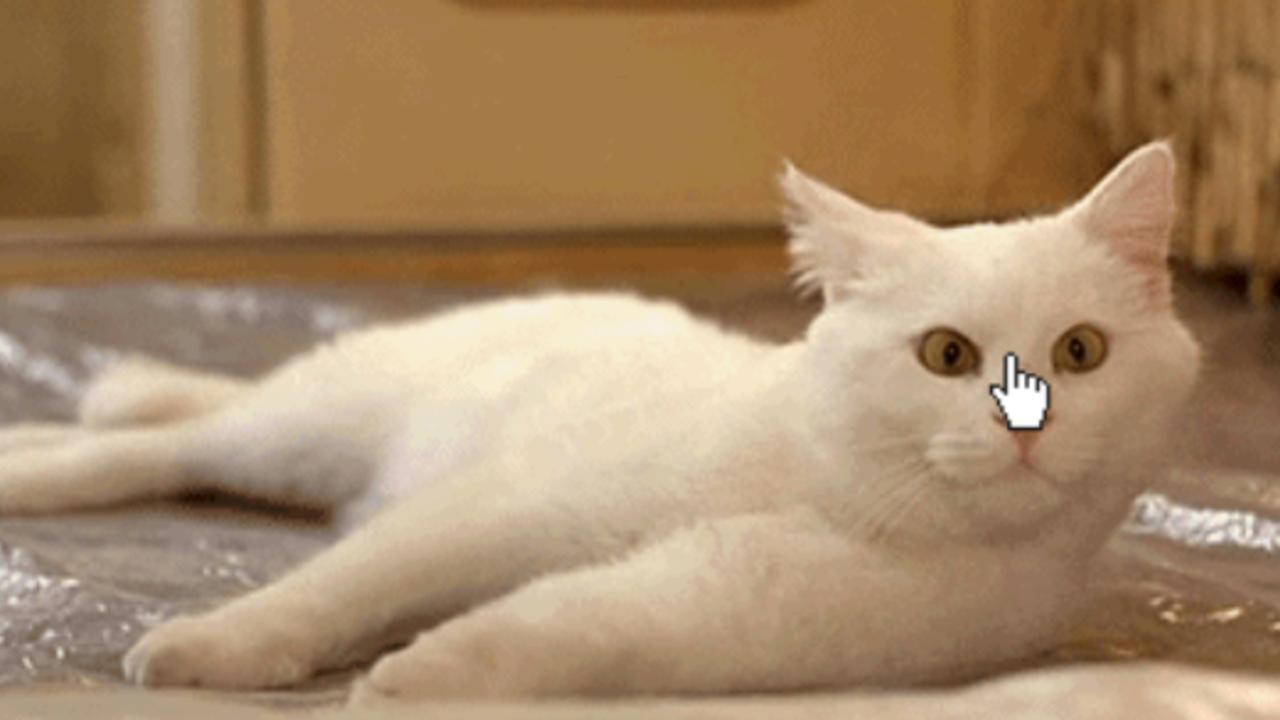 Katzen GIFs vom Katzenhasser: Heute ist Weltkatzentag