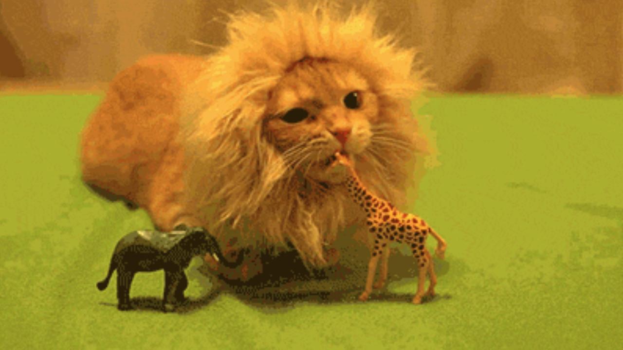 Katzen-Gifs vom Katzenhasser Löwe teaser