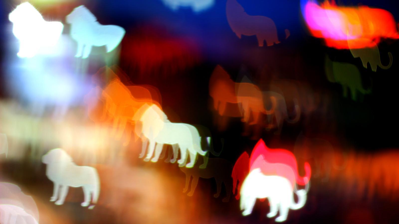 nachttiere