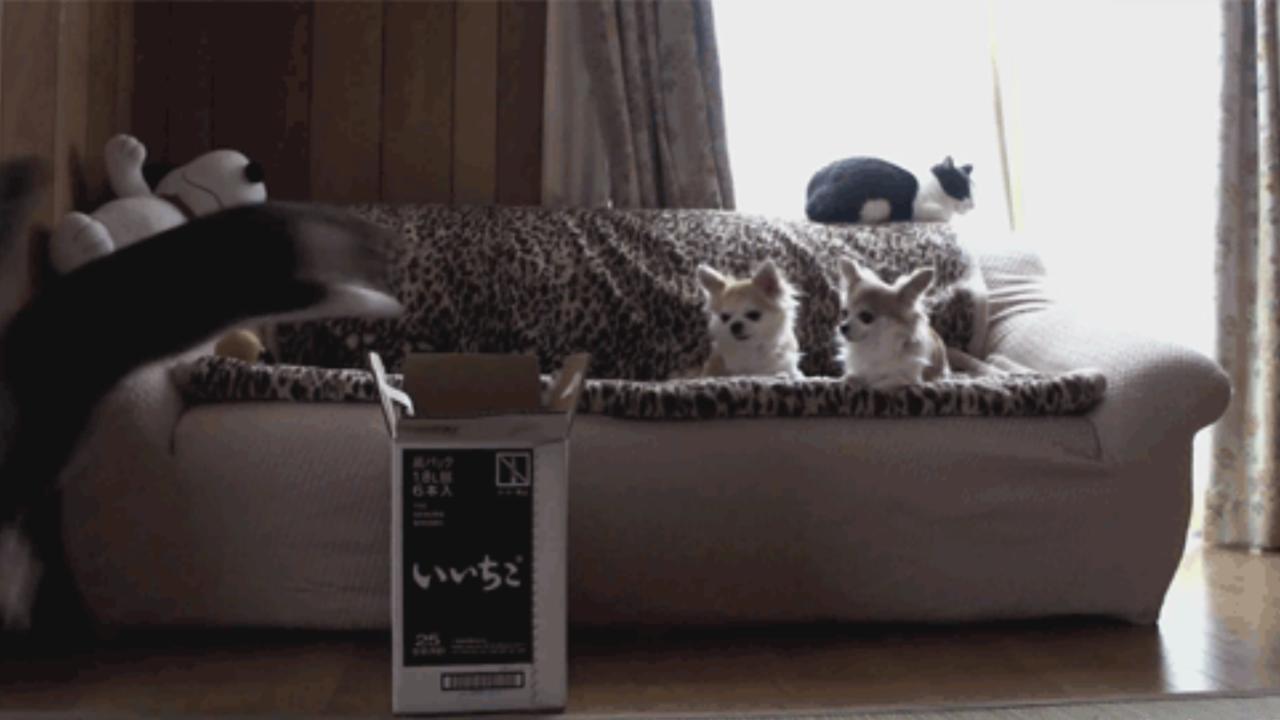 Katzen-Gif vom Katzenhasser Karton start