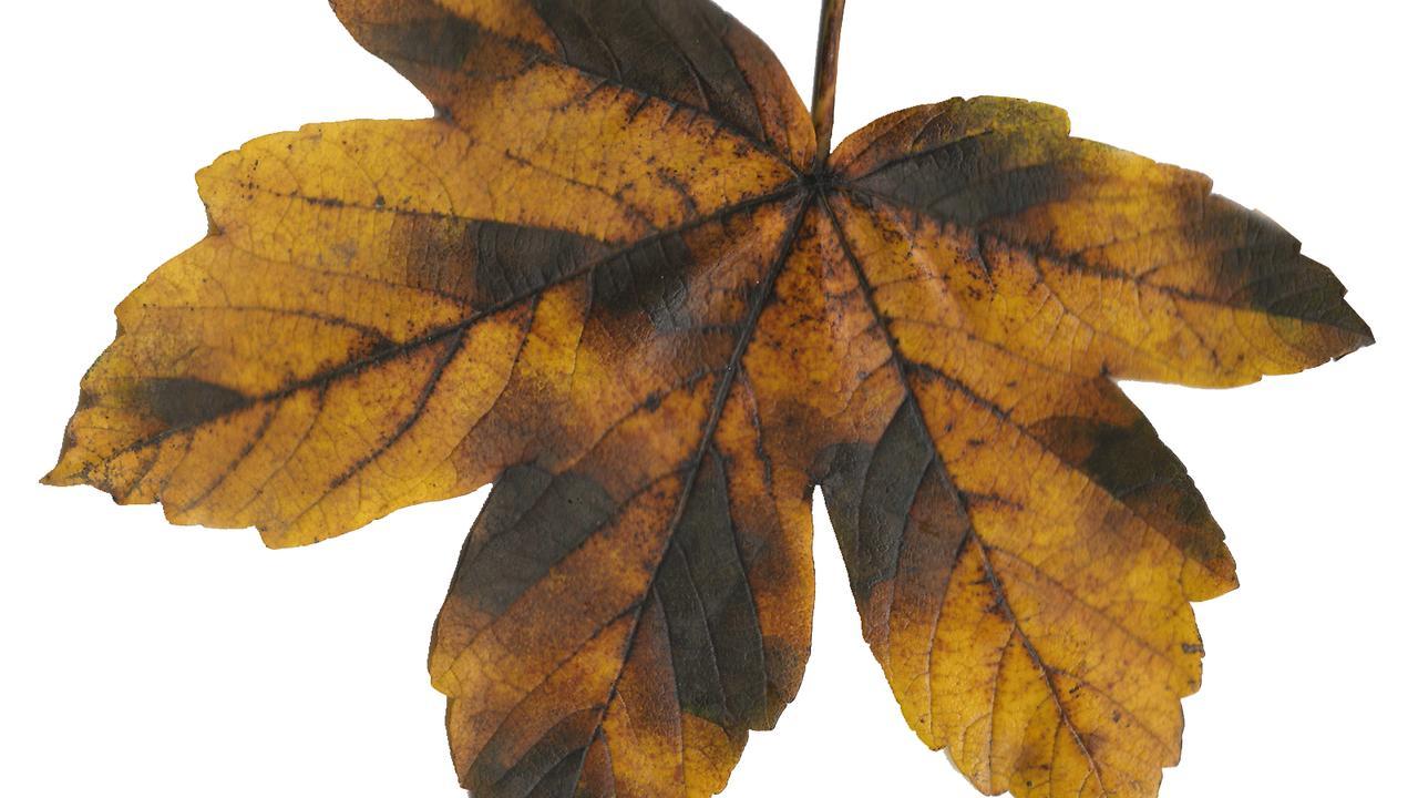 Fragmente einer Großstadt Herbstblues Start