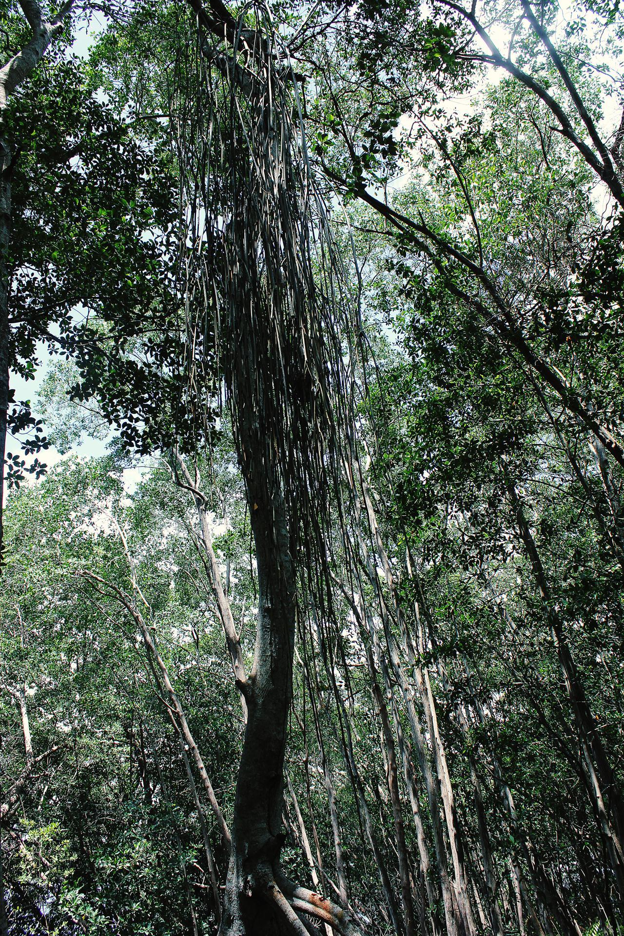 Mexiko Wald