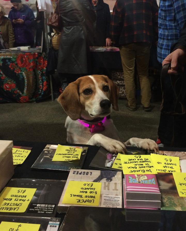 ILM-Hund