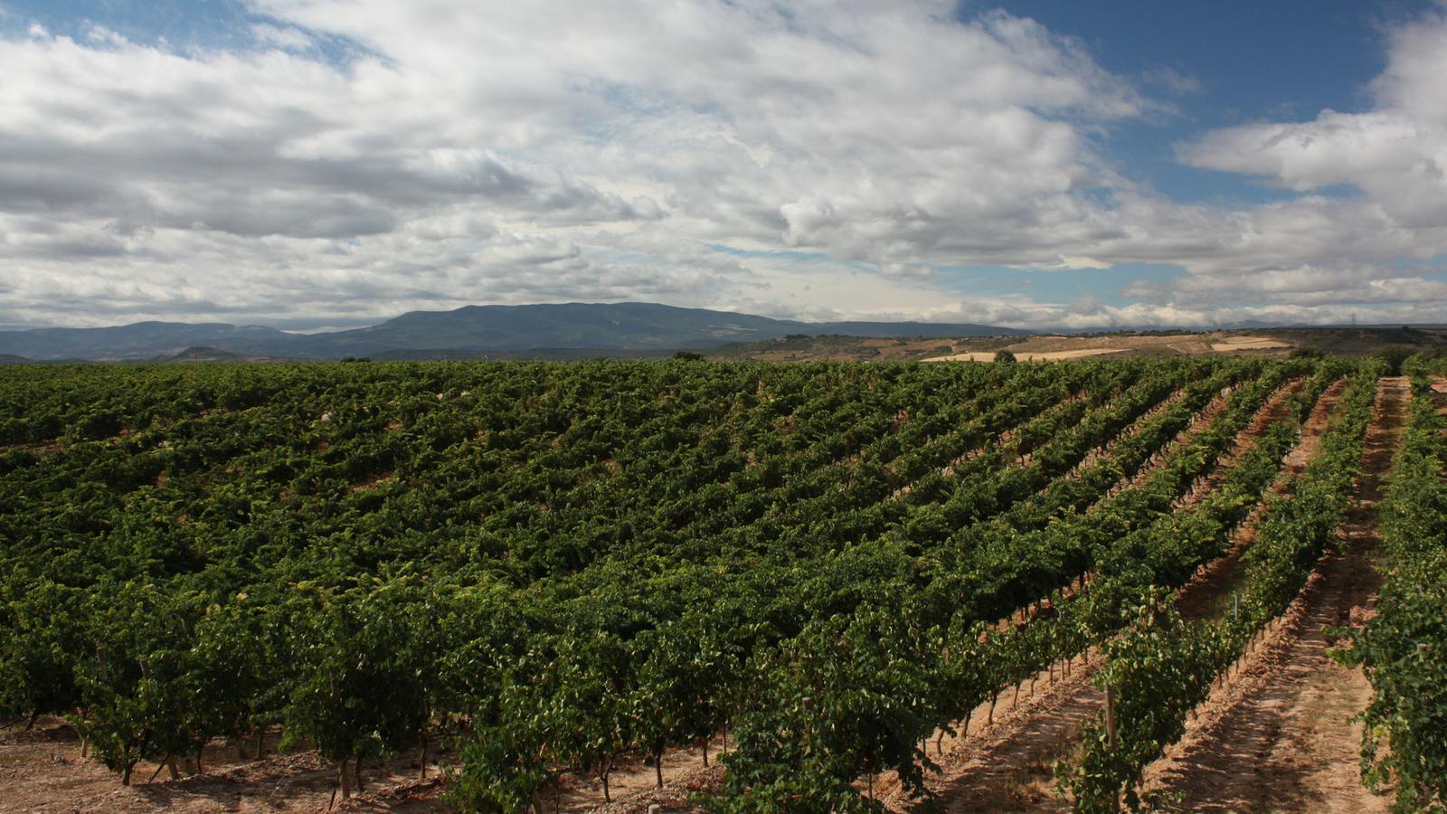 Weinanbaugebiet Rioja