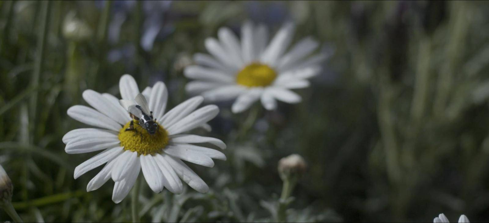 Hängengeblieben 2017 - Insektensterben