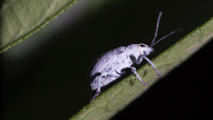 insekten leseliste