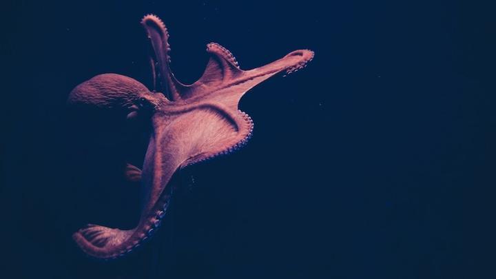 Oktopus LL 290919