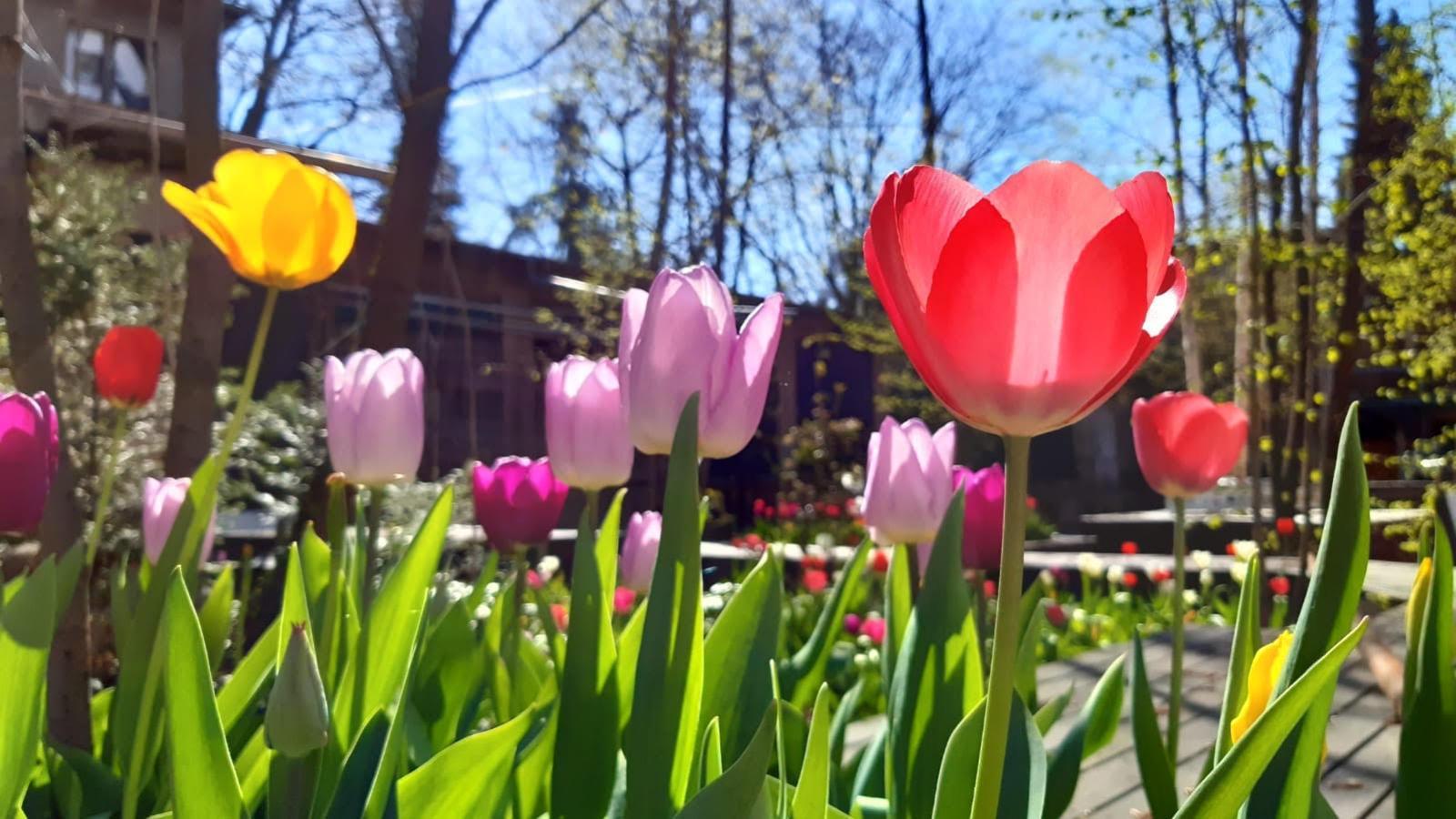 About Blank Garten
